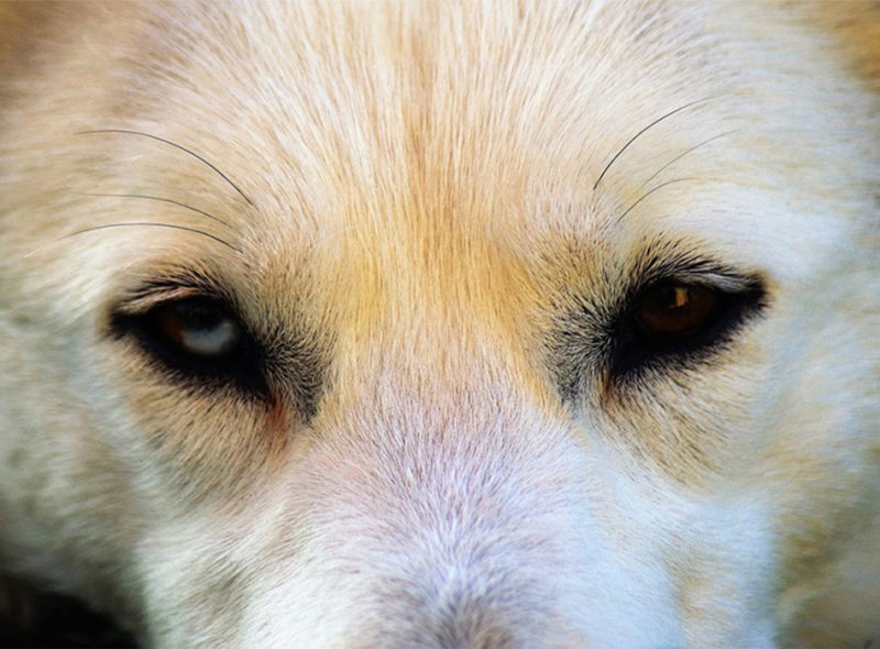Blog: Das harte Leben eines Bürohundes