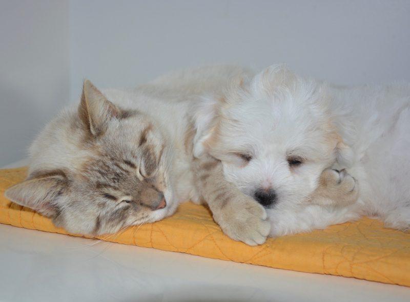 Blog: Katze und Hund schlafen