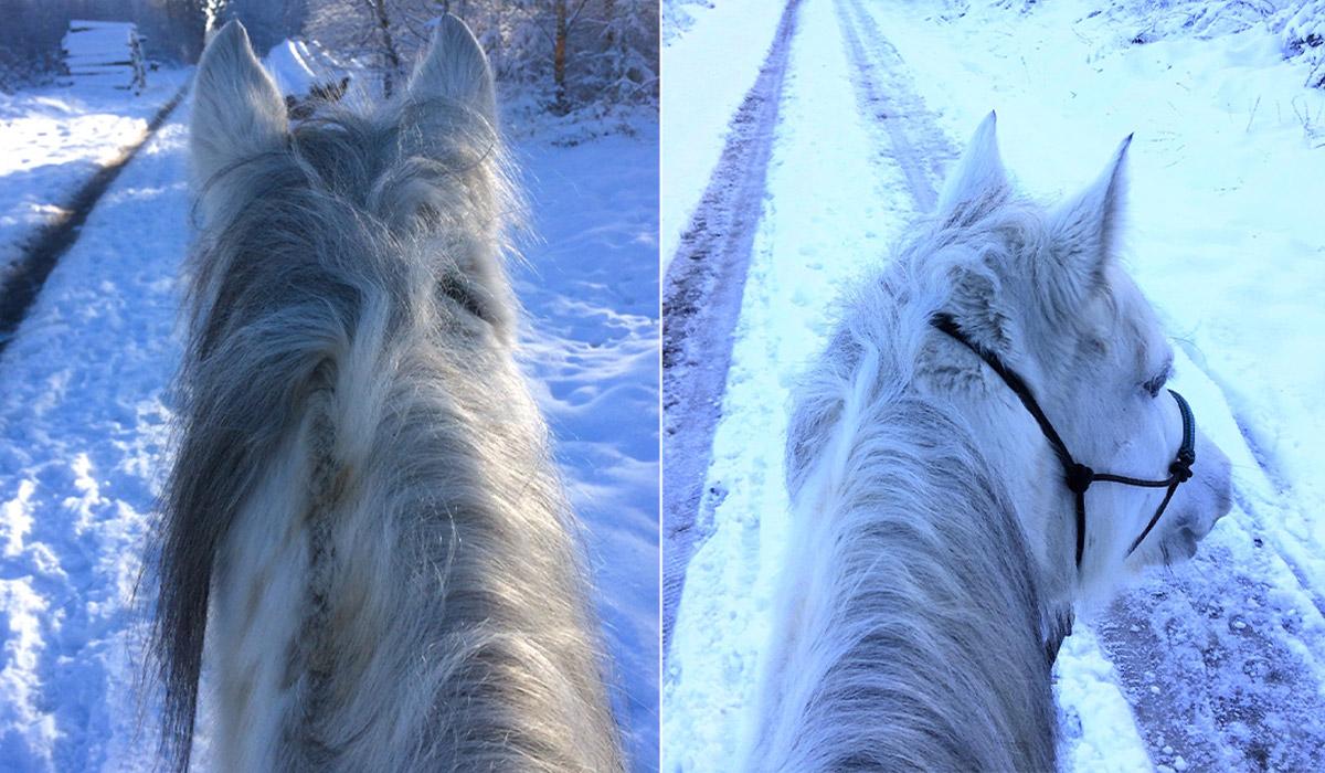 Blog: Fake News / Pony Ausflug im Schnee